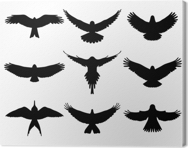 Black silhouettes of birds in flight vector canvas print birds
