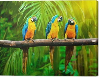Blue-and-Yellow Macaw Canvas Print