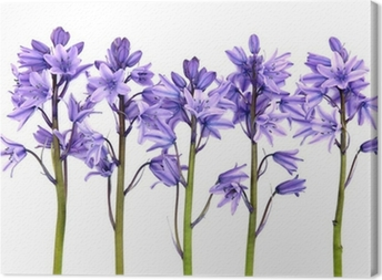 Bluebell Flowers Canvas Print