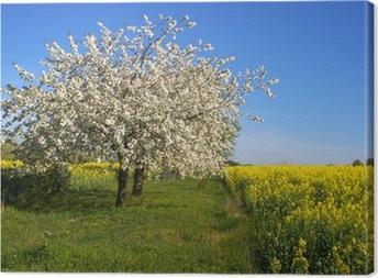 Blühender Apfelbaum Canvas Print