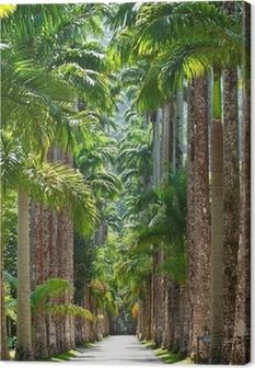 Botanical garden. Rio de Janeiro Canvas Print