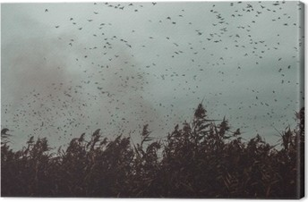 bunch of Birds flying close to cane in a dark sky- vintage style black and white Canvas Print