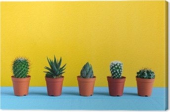 Cactus on the desk with yellow wal Canvas Print