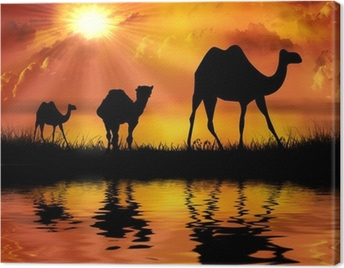 Camels on a beautiful sunset background Canvas Print