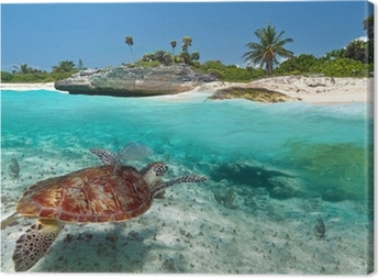 Caribbean Sea scenery with green turtle in Mexico Canvas Print