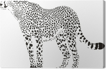 cheetah - black and white vector illustration Canvas Print