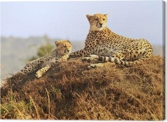 Cheetahs on the Masai Mara in Africa Canvas Print