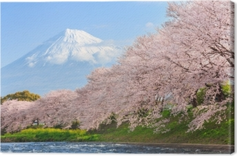 Cherry blossoms or Sakura and Mountain Fuji in background Canvas Print