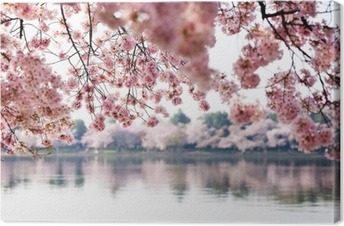 Cherry Blossoms over Tidal Basin in Washington DC Canvas Print