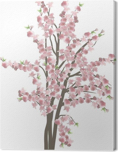 Cherry tree with large pink flowers isolated on white canvas print cherry tree with large pink flowers isolated on white canvas print mightylinksfo