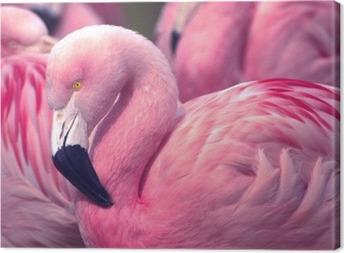 Chilean Pink Flamingo Canvas Print