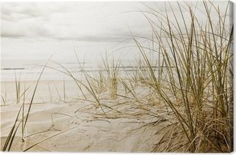 Close up of a tall grass on a beach Canvas Print