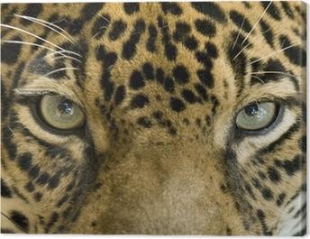 close up the eyes of a beautiful jaguar or panthera onca Canvas Print