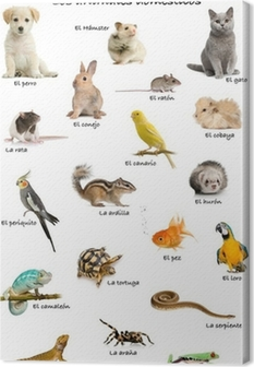 Collage of pets and animals in Spanish Canvas Print