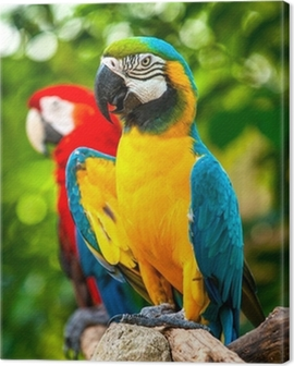 Colorful blue parrot macaw Canvas Print