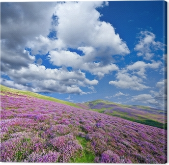 Colorful hill slope covered by violet heather flowers Canvas Print