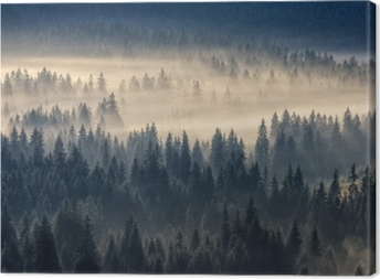 Coniferous forest in the foggy mountains Canvas Print