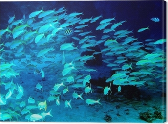 Coral fish in blue water. Canvas Print