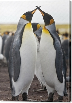 couple king penguins Canvas Print