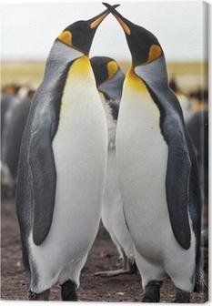 couple king penguins Canvas Print