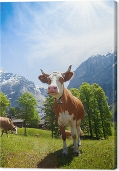 Cows in Switzerland mountains Canvas Print