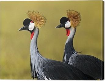 Crowned Crane Canvas Print