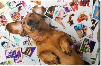 Cute dog among the photos Canvas Print