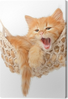 Cute red-haired kitten in hammock Canvas Print