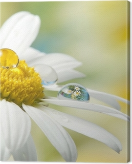 daisy with drop with mirroring effect Canvas Print