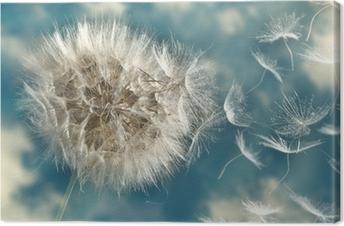 Dandelion Loosing Seeds in the Wind Canvas Print