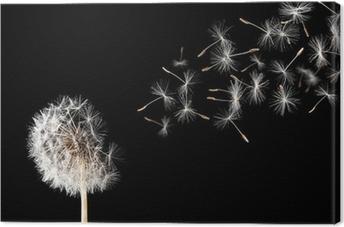 Dandelion on black background. Canvas Print