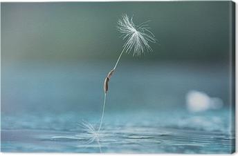 dandelion seeds macro Canvas Print