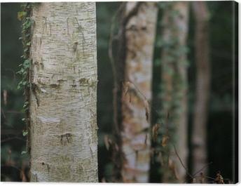 dark birch tree forest Canvas Print