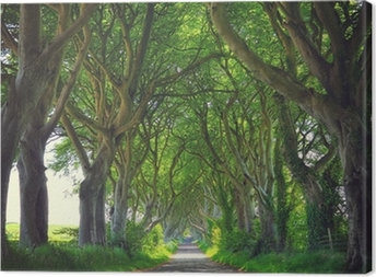 Dark Hedges trees Canvas Print