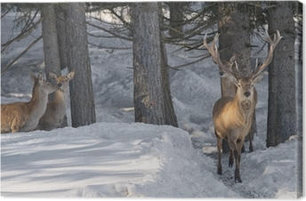 Deer on the snow background Canvas Print
