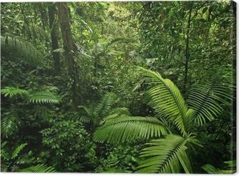 Dense Tropical Rain Forest Canvas Print