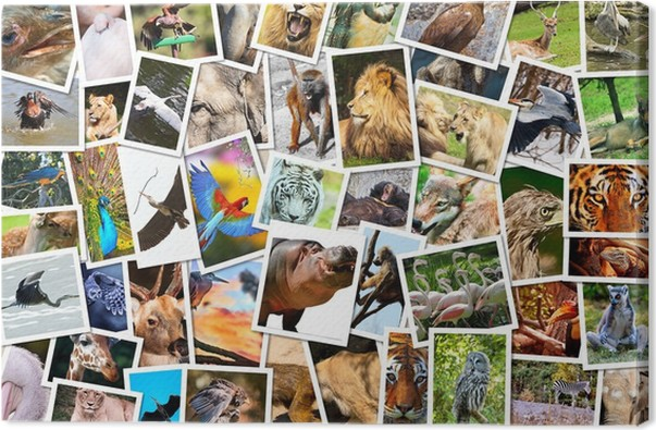 different animals collage canvas print pixers we live to change
