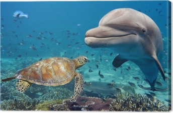 dolphin and turtle underwater on reef Canvas Print