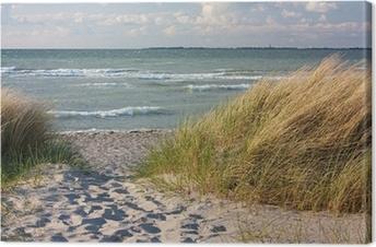Dünenlandschaft am Strand der Ostsee bei Heiligenhafen Canvas Print