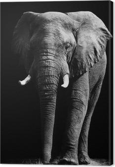 Elephant isolated on black background Canvas Print