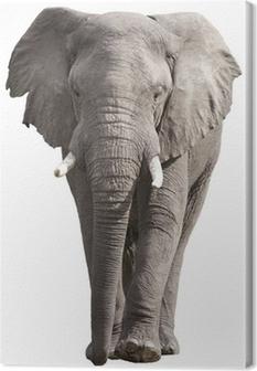 Elephant Canvas Print Pixers We Live To Change