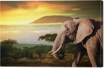 Elephant on savanna. Mount Kilimanjaro at sunset. Safari Canvas Print