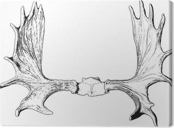 elk antlers Canvas Print