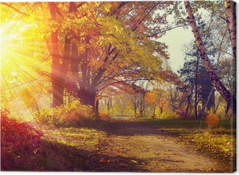 Fall. Autumnal Park. Autumn Trees and Leaves in sun light Canvas Print
