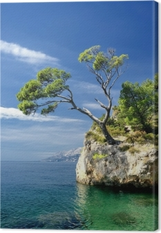 Famous beautiful rock with pine trees in Brela in Croatia Canvas Print