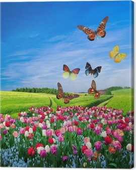 Field of colorful flowers and a butterfly group Canvas Print