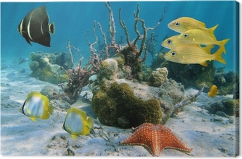 Fishes and sea star Canvas Print