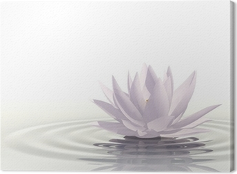 Floating waterlily Canvas Print
