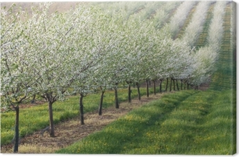Flowering orchard Canvas Print