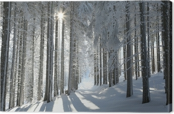 Forest trail among frosted pine trees Canvas Print